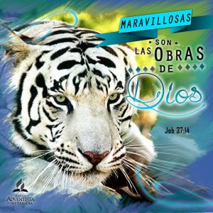 Square 150Pdi_web ESP Tigre