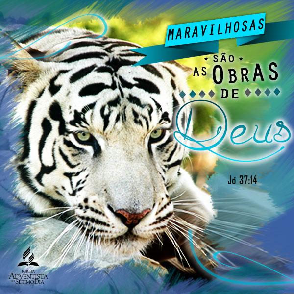 Square 150Pdi_web PT Tigre